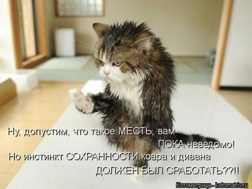 http://sg.uploads.ru/t/yMYhl.jpg