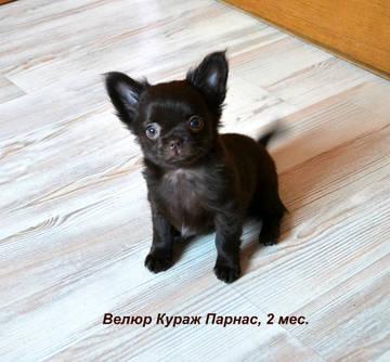 http://sg.uploads.ru/t/ySumB.jpg