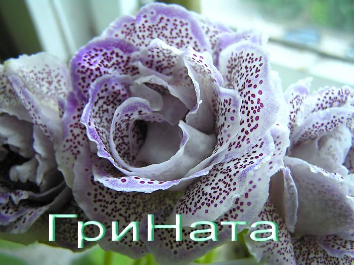 http://sg.uploads.ru/t4lRf.jpg