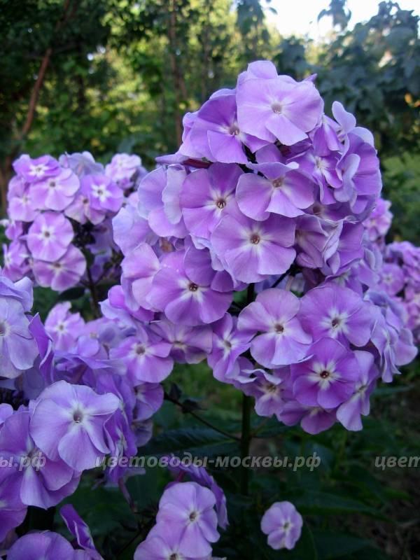 http://sg.uploads.ru/tCnqp.jpg