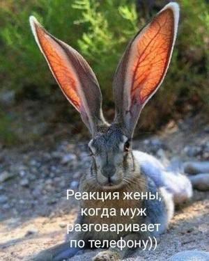 http://sg.uploads.ru/wKs2u.jpg