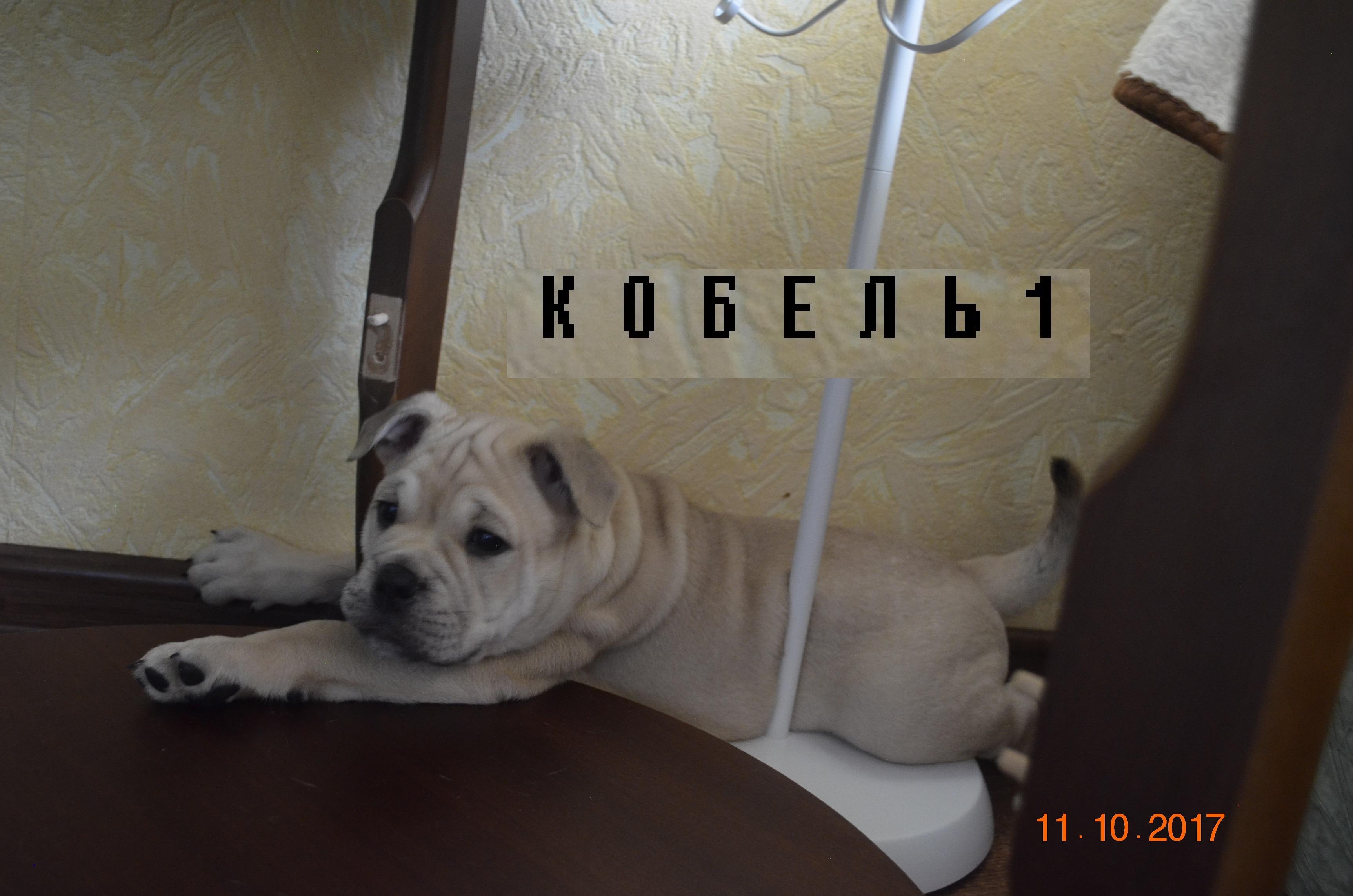 http://sg.uploads.ru/x3HQ4.jpg