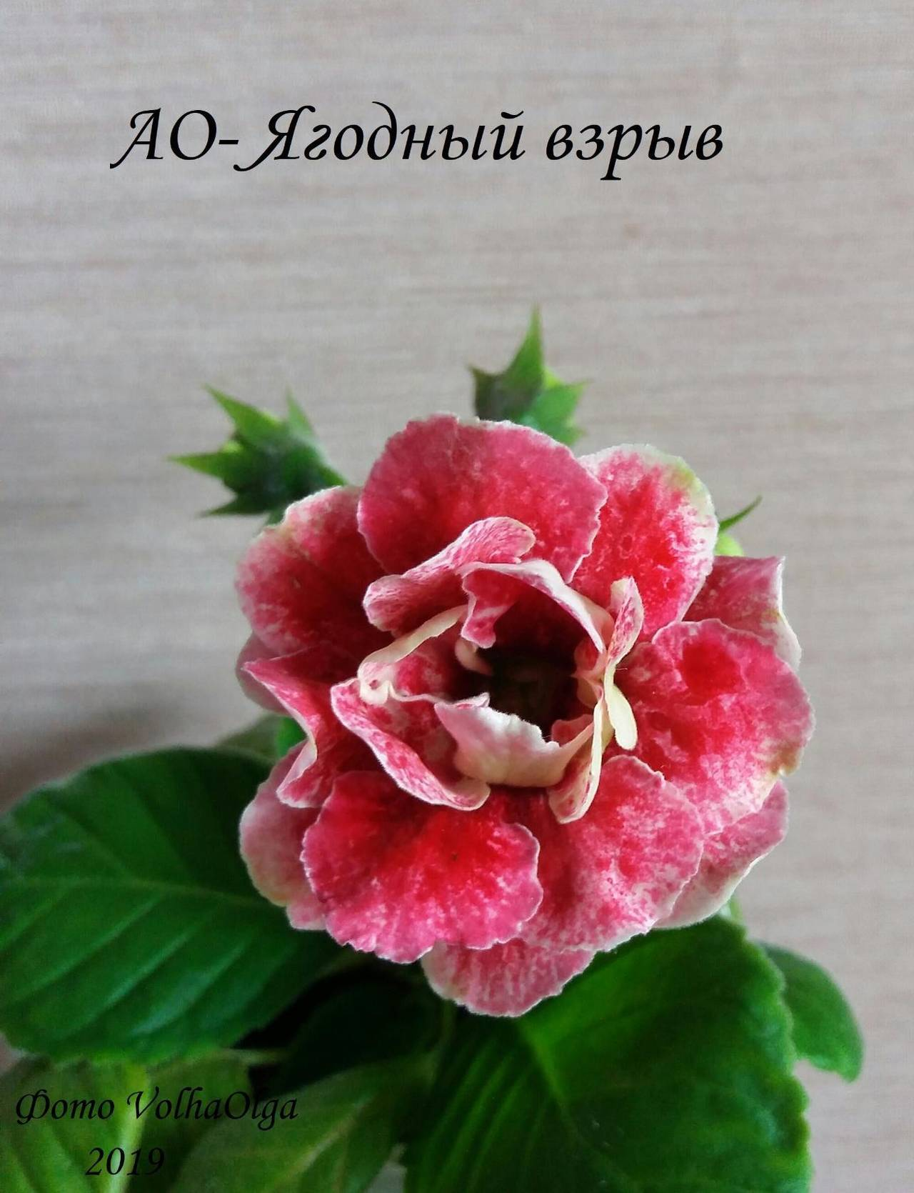 http://sg.uploads.ru/yWJS2.jpg