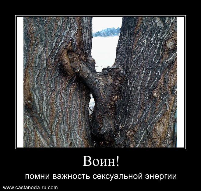 http://sg.uploads.ru/3af4I.jpg