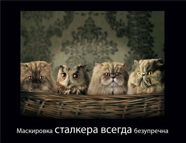 http://sg.uploads.ru/84OMs.jpg