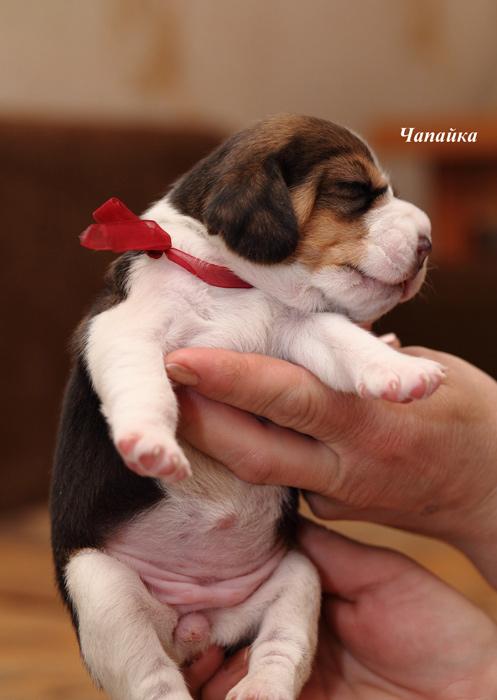 http://sg.uploads.ru/BmHoG.jpg