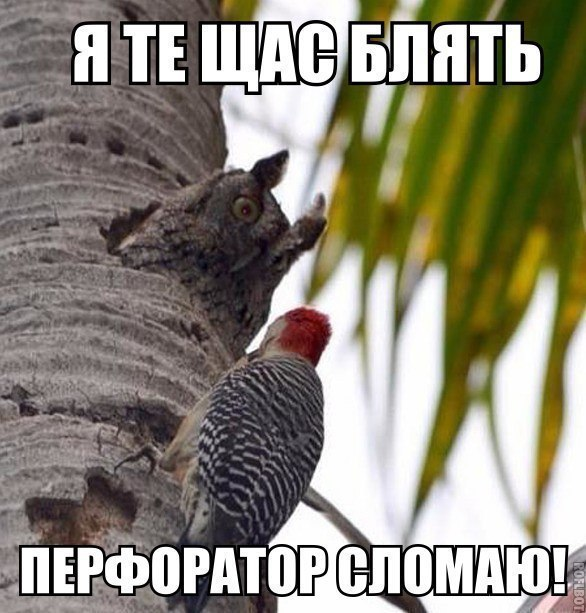 http://sg.uploads.ru/Cp3yL.jpg