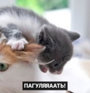http://sg.uploads.ru/H23BZ.jpg
