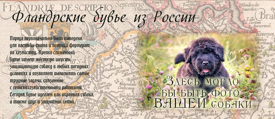 http://sg.uploads.ru/HPkol.jpg