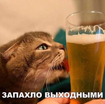 http://sg.uploads.ru/t/38u0t.jpg