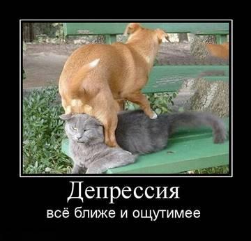 http://sg.uploads.ru/t/OS1tX.jpg