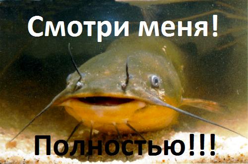 http://sg.uploads.ru/t/Tn8Vb.png