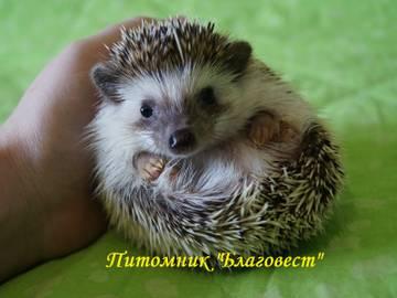 http://sg.uploads.ru/t/Vkbvu.jpg