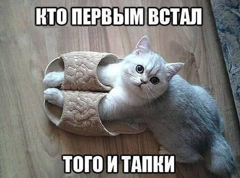 http://sg.uploads.ru/t/a2dir.jpg