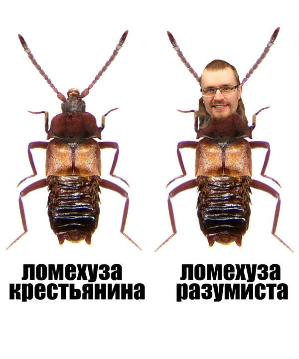 http://sg.uploads.ru/t/i2npR.jpg