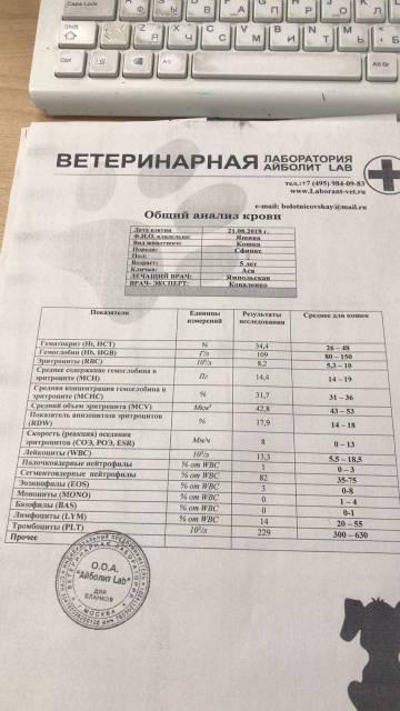 http://sg.uploads.ru/t/lio20.jpg