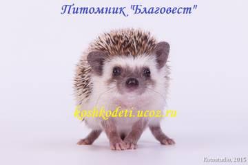 http://sg.uploads.ru/t/xUlML.jpg