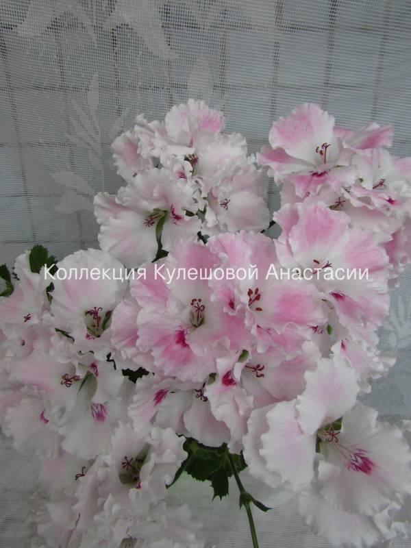 http://sg.uploads.ru/t/znZHa.jpg